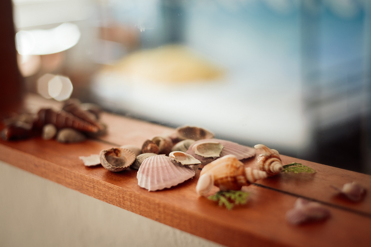 Detail of the 6 Bed Ocean room - details of decoration with mussels an seastars